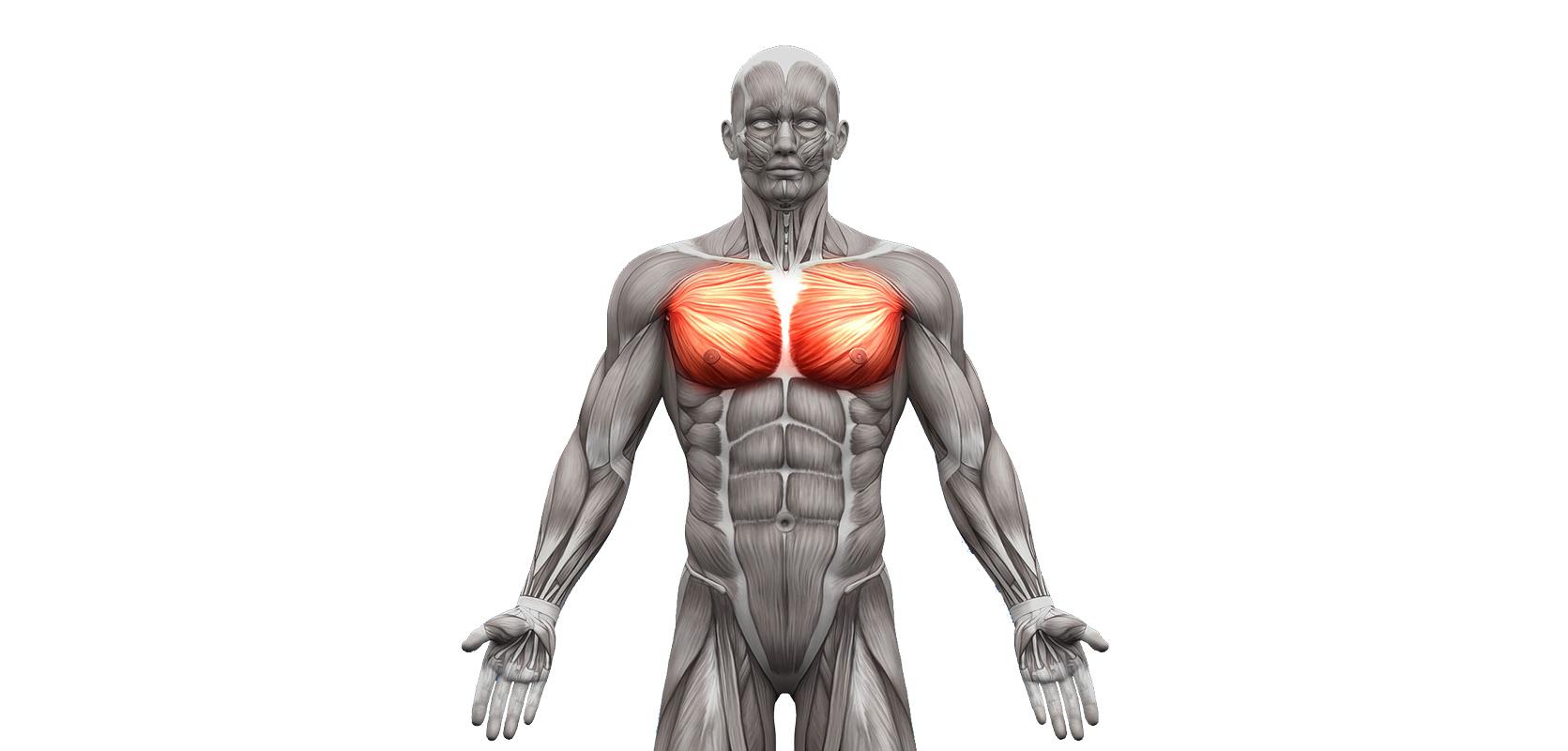 Exercices pectoraux, voici mon programme pour se muscler